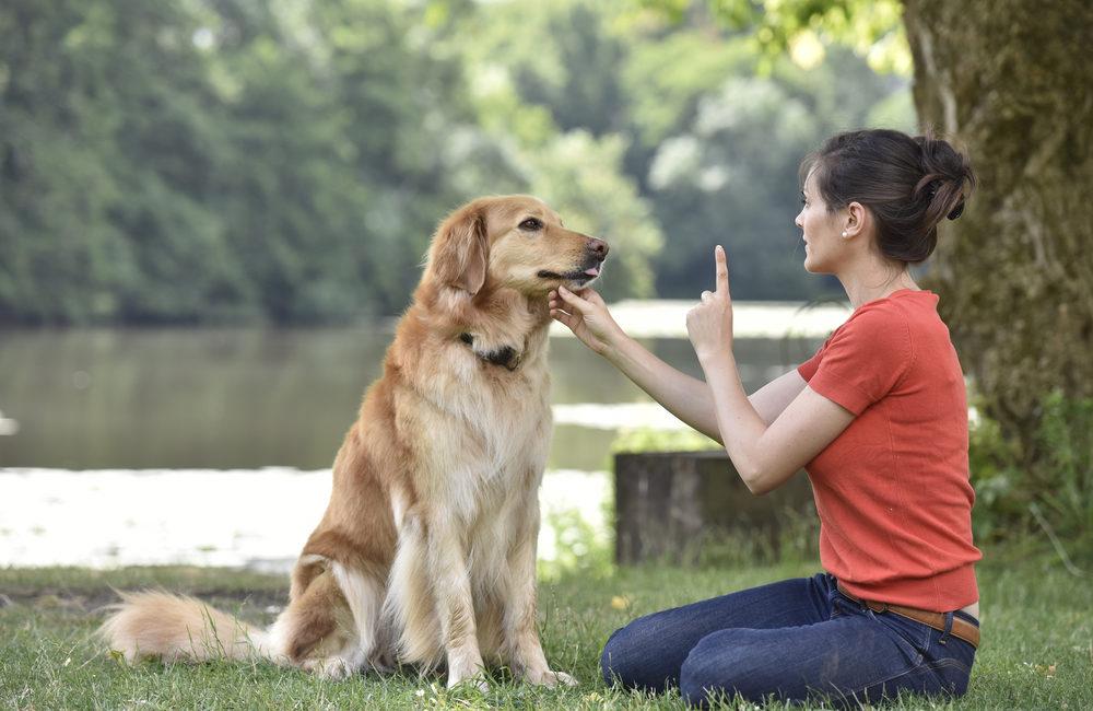 5 bons réflexes à adopter pour réussir l'éducation de son chien